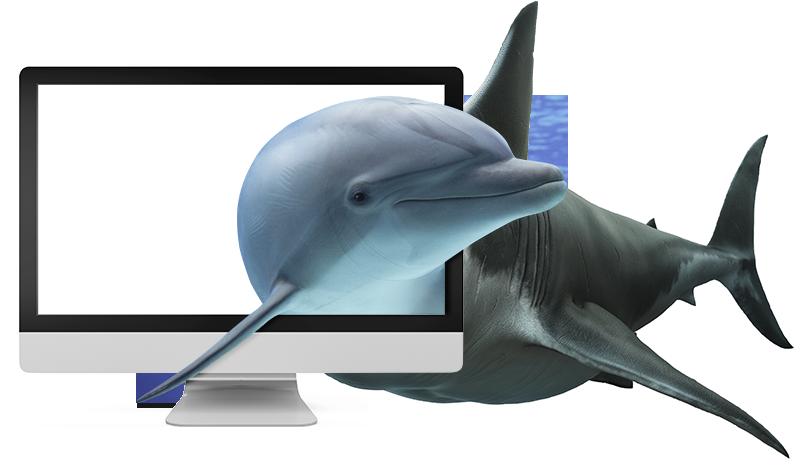 Hai-Delfin-Bild